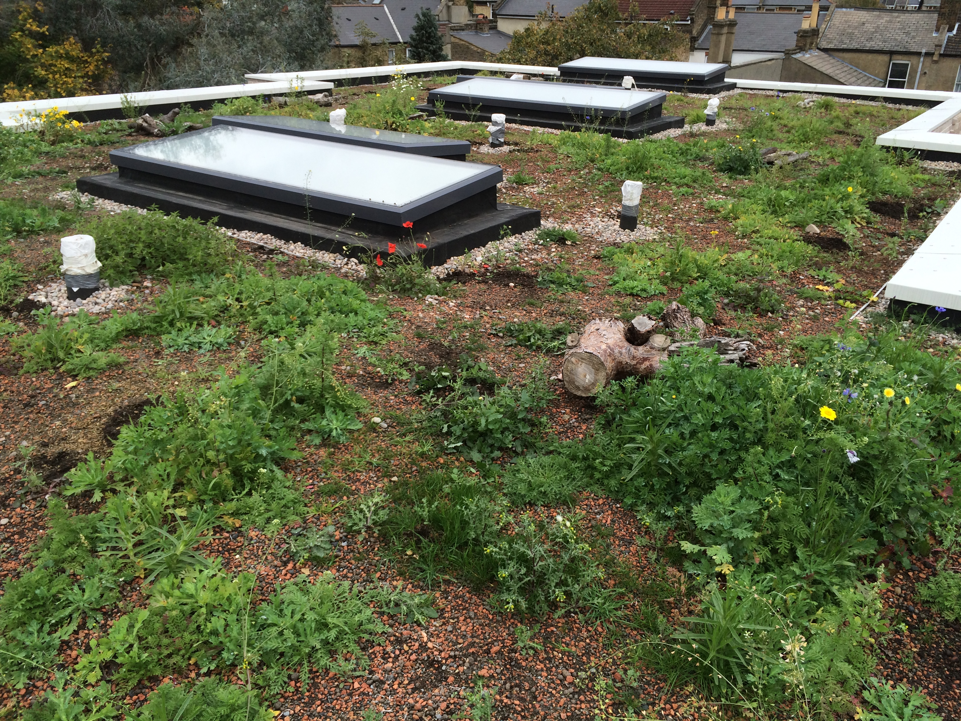 Green Roofs Why So Many Go Wrong And How To Get It Right Aecb